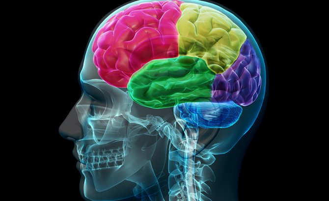 TBI Lawyers Discuss Common Head Injuries Suffered in Serious Falls & Auto Accidents