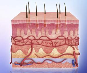 cervical spinal fusion surgery